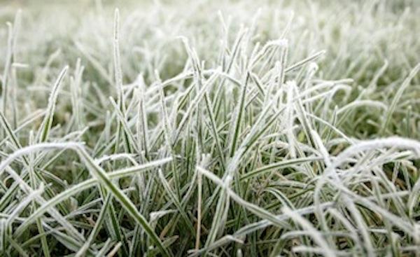 Temperature Sensor Secrets: How Can Freeze Sensors Help ...