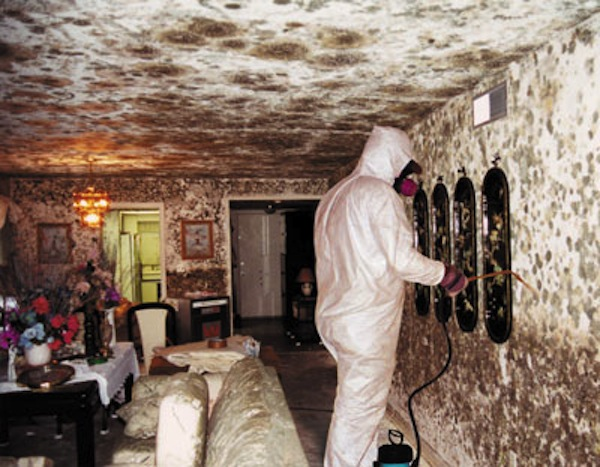 mold vacation disaster